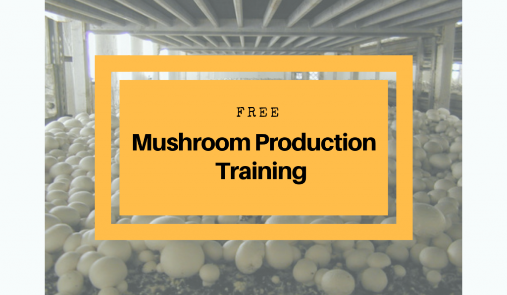 Free Mushroom Production Training in Philippines 2019